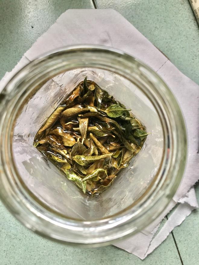 leafs1.jpg